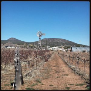 A Visit to Bruzzi Vineyard in Young, Arizona  (Pleasant Valley)